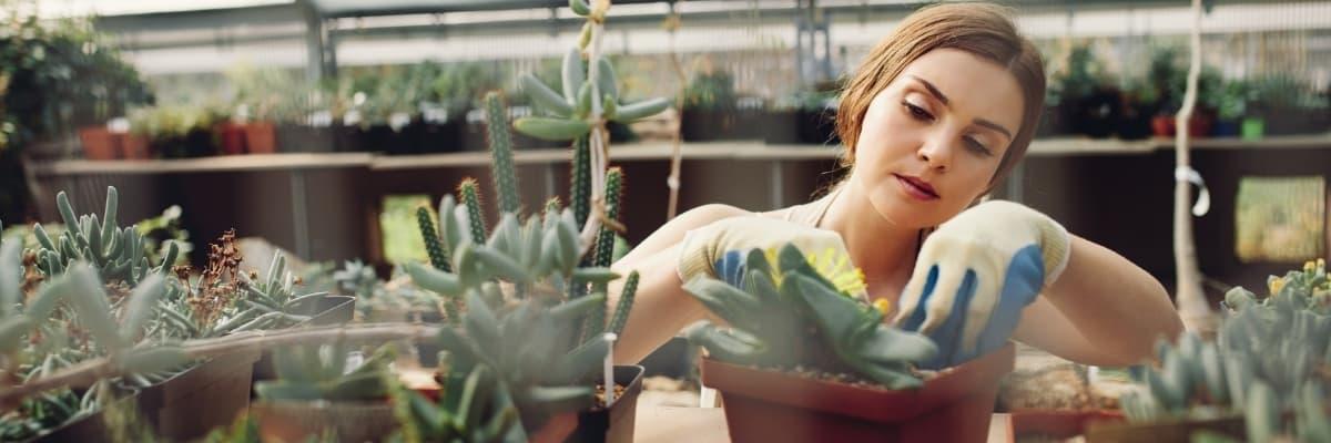 Horticulture et jardinerie